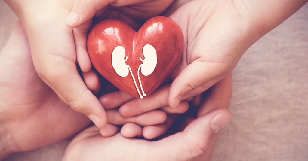 hands holiding red heart with kidney, world kidney day; blog: The Link Between Heart and Kidney Health